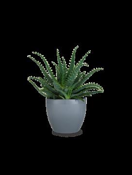 Rosendahl Urteplanteskjuler-20